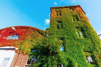 Revêtement de façade verte